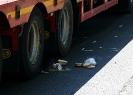 Śmiertelny wypadek w Oliwie
