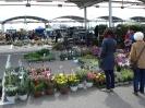 wiosna w ogrodzie 2014_043