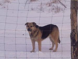 Znaleziono Psa!!!!